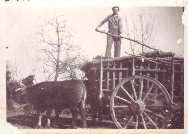 charrette transport bois
